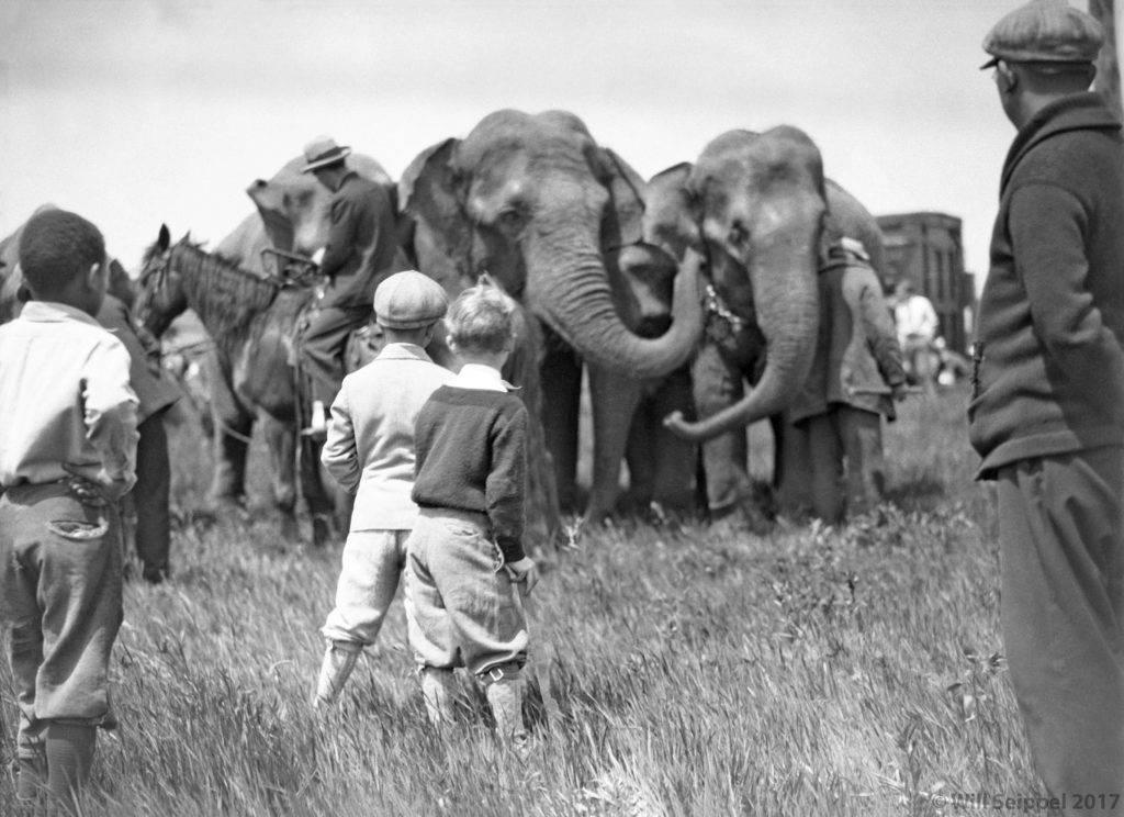 Intro to elephants