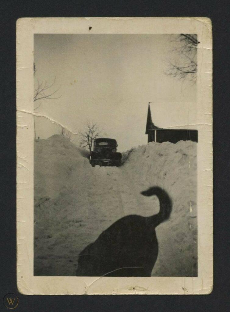 Vintage photograph black dog cropped 1 aa803d15335d344f8d86c3c9d8e60780