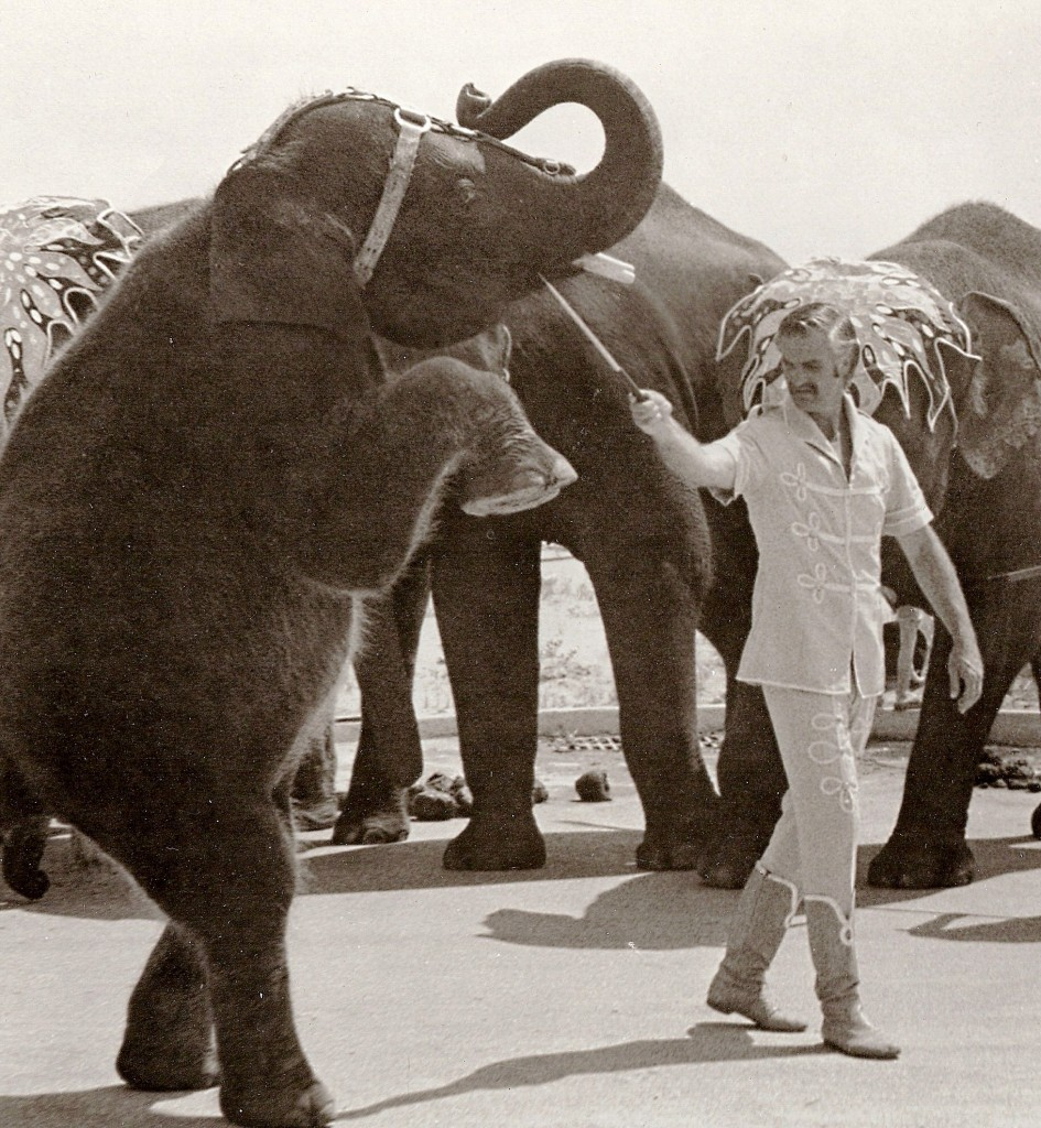 Buckles Woodcock, who hosts Buckles Blog, working with elephants in the 108th Edition of Ringling Bros. and Barnum & Bailey.