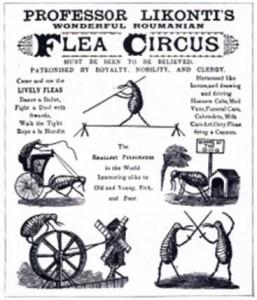 A poster for a flea circus.