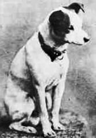 The only know photograph of the original Nipper, in that famous pose.