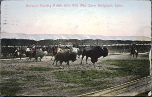 This Buffalo Bill Wild West postcard shows buffalo in the open air arena.