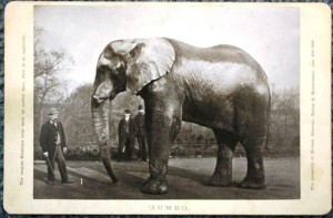 "Edward Bierstadt created this Artotype photo image of Jumbo the elephant. It is mounted like a cabinet card. Under the image it says ""Jumbo."" On the left side the text reads ""The largest elephant ever seen by mortal man, wild or in captivity."" The right side says ""The property of Messrs. Barnum, Bailey & Hutchinson. Cost $30,000."" Value of this photo is $50."