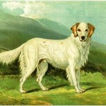 "Unframed 1881 Vero Shaw chromolithographs from ""The Illustrated Book of the Dog"" sell for $45 to $85 each"