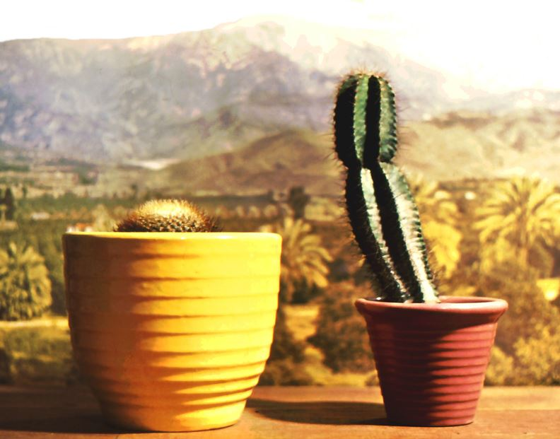Ring garden pottery was an immediate hit when it appeared at the many nurseries in Southern California that Bauer had long been supplying with red-clay flower pots.